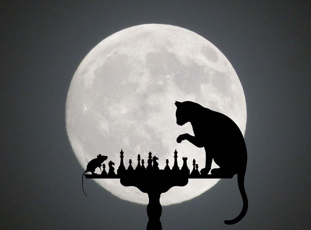 Katze und Maus spielen Schach im Mondschein