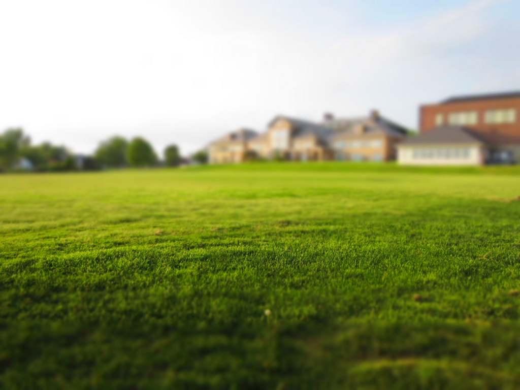 Ein grüner maulwurffreier Rasen durch Maulwurfgitter erreicht
