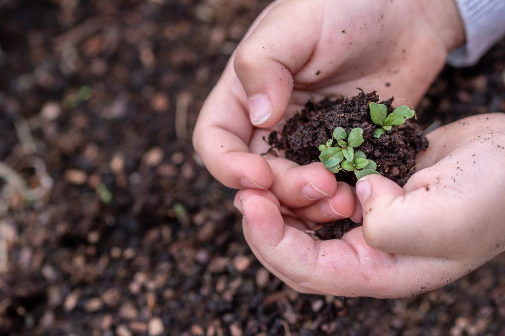 Setzlinge Pflanzen Erde