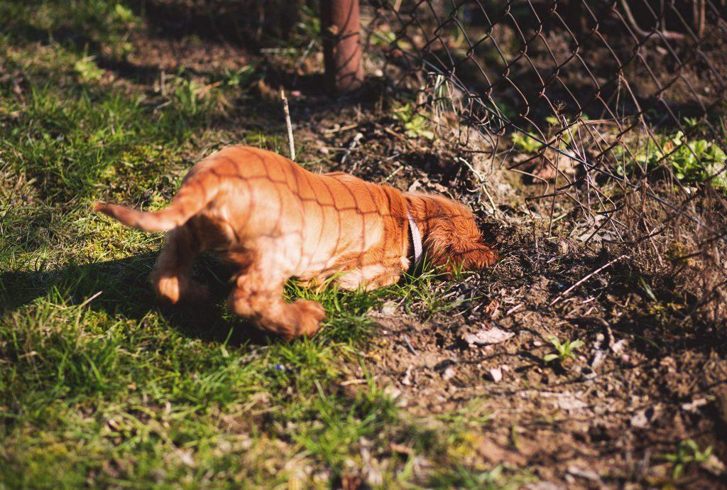 Hund Garten Karbid