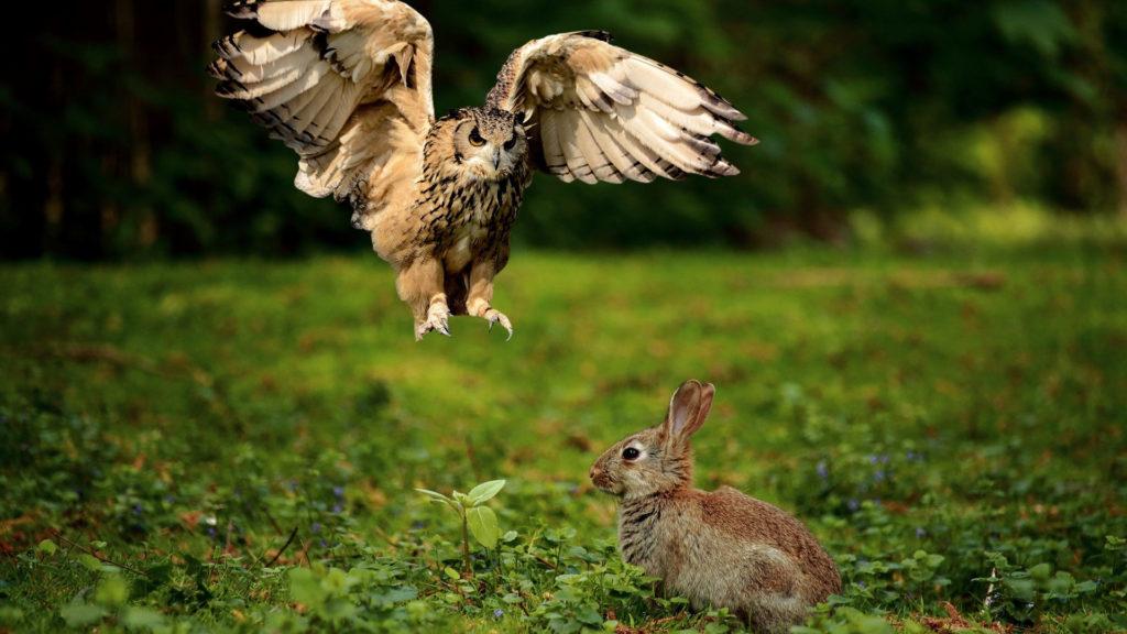 Eule und Kaninchen