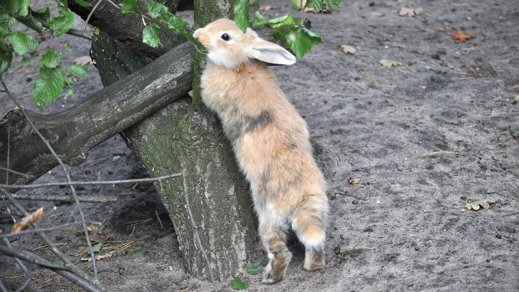 Kaninchen am Baum
