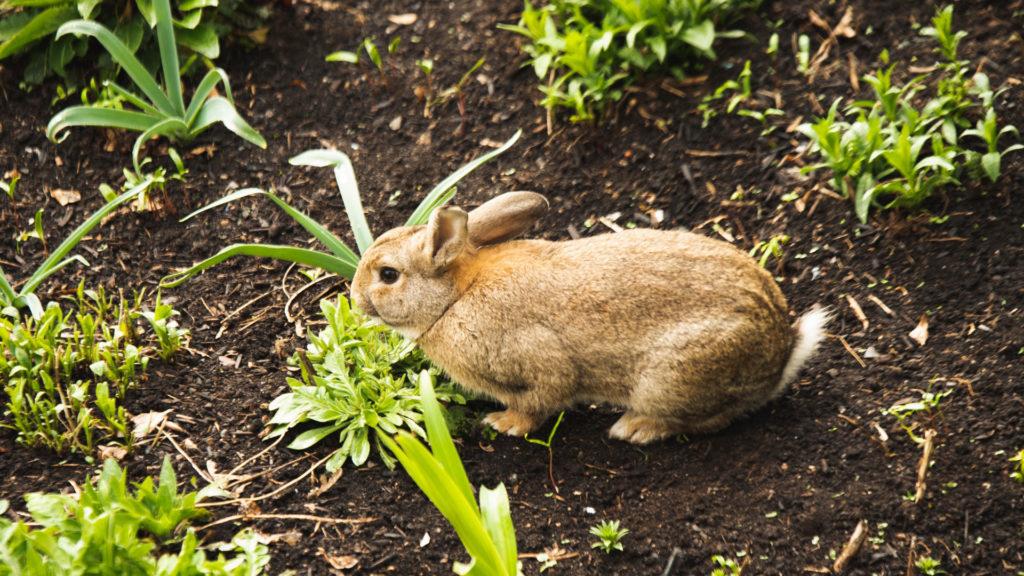 Kaninchen im Blumenbeet