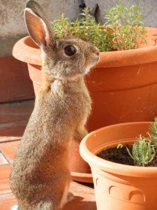 Kaninchen mit Jungpflanzen