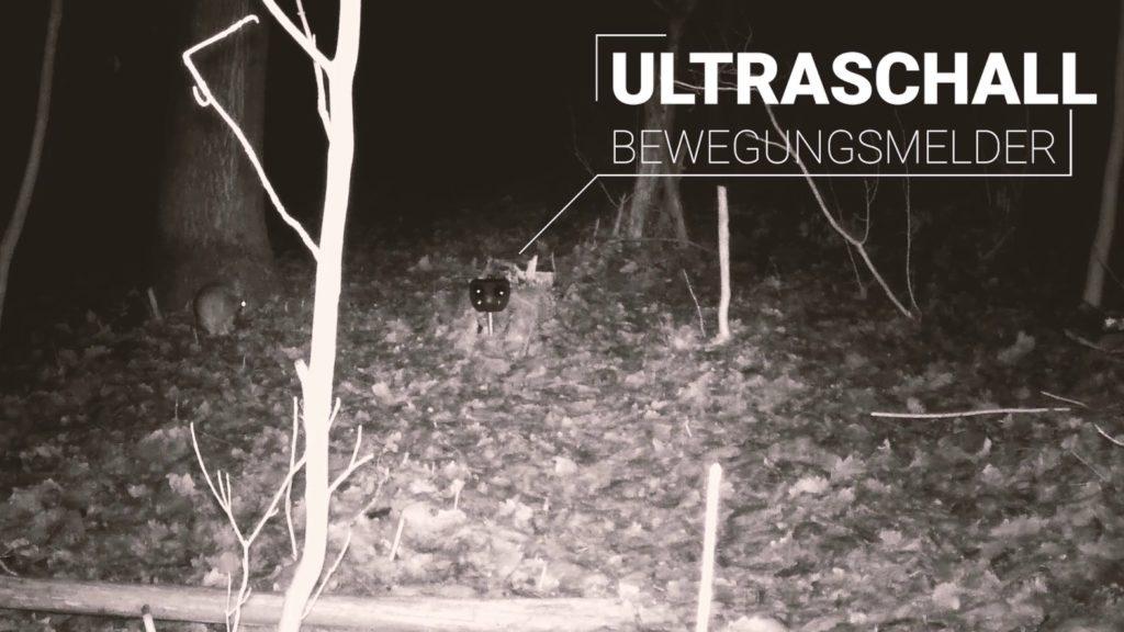 Kaninchen Ultraschall Test Versuchsaufbau